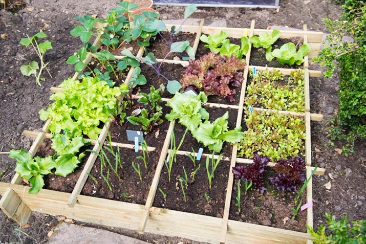 Designing Your Own Vegetable Garden Co Op Welcome To The Table