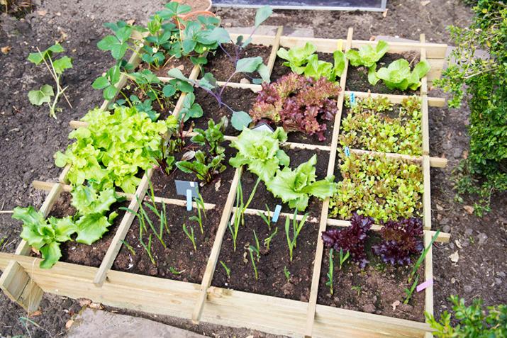 Designing Your Own Vegetable Garden Coop stronger together
