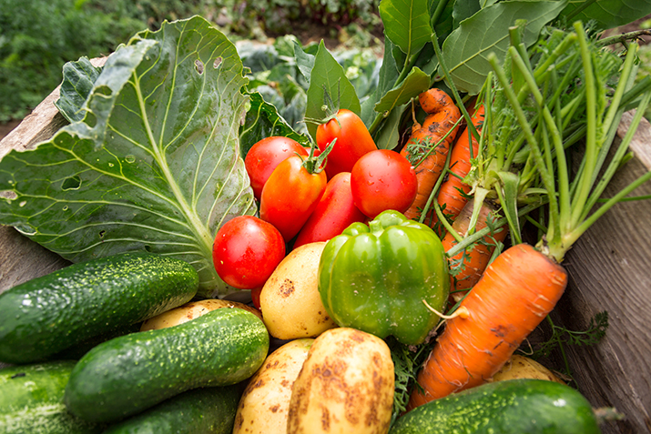 Get Healthy And Save Money By Food Gardening Co Op Welcome To