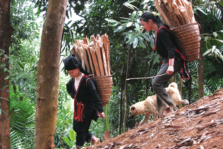 Fair trade cinnamon producers in Yen Bai Province, Vietnam