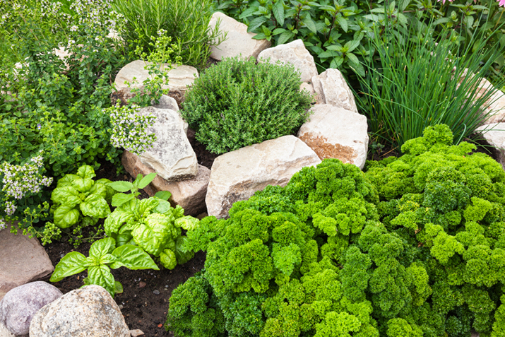 Image result for Herb Gardening