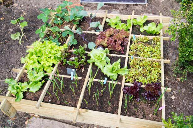 Designing Your Own Vegetable Garden