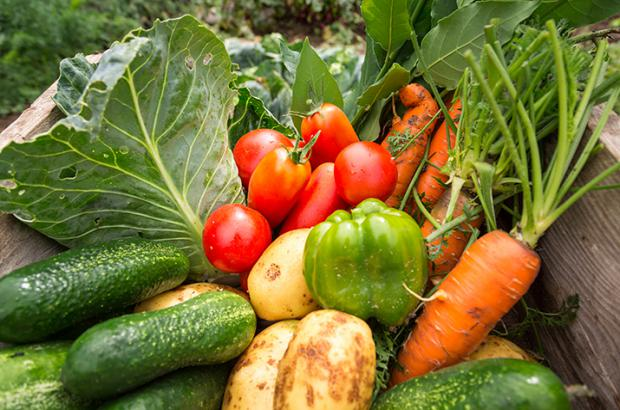 Get Healthy and Save Money by Food Gardening