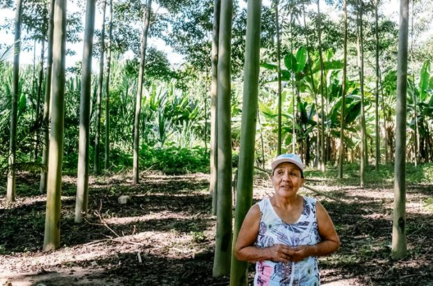 Female farmer in sustainable tropical forest in Peru