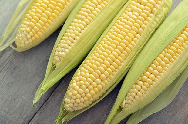 Partially husked fresh sweet corn