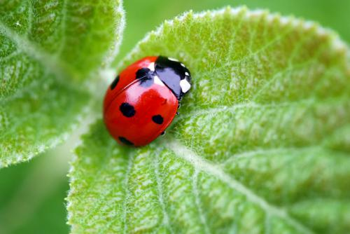 Beneficial Insects: The Good Guys in the Garden | Co+op ...
