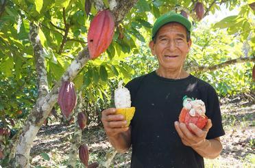 Fair trade cacoa farmers