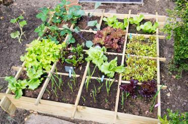 Designing Your Own Vegetable Garden
