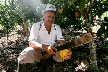 Peruvian farmer holding a cacao pod under under a cacao tree canopy