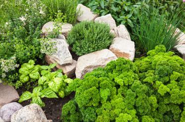 Herb Gardening 101
