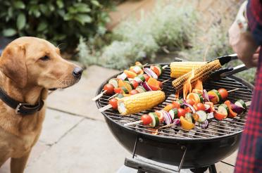 Dog watching vegetables being grilled outdoors