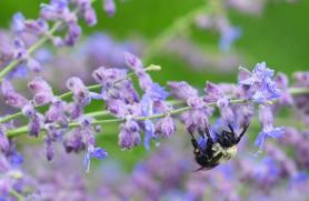 Organics and Pollinators: Making Food Happen