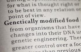 What is a GMO?