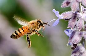 Organics and Pollinators: Making Food Happen