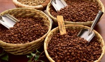 Growing Coffee with a Conscience