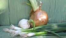 Growing_Green_Onions_Without_a_Garden