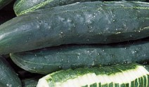 Kinds of Cukes