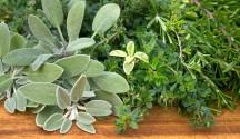 Fresh Herbs Primer