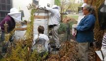Urban Beekeeping Project Keeps Co-op Buzzing