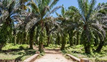 Palm Oil: Sustainability Crossroads