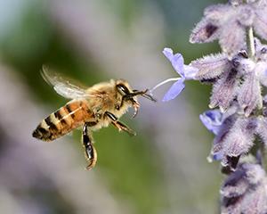 Organics and Pollinators Making Food Happen