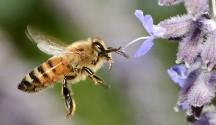 Organics and Pollinators Making Food Happen1