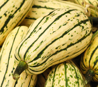 winter squash guide co op stronger together