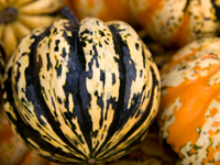 Heart of Gold, Festival, Carnival Squash