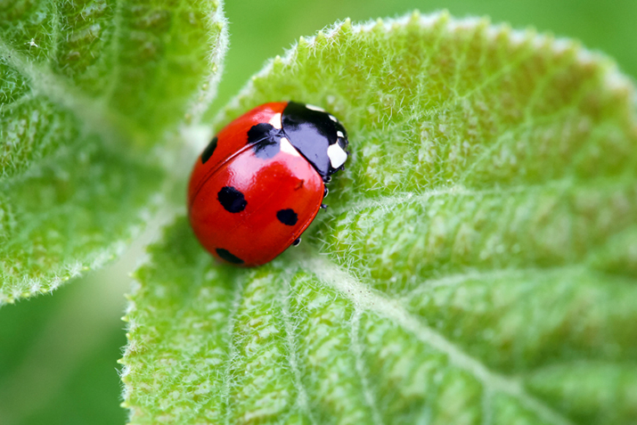 Beneficial Insects: The Good Guys in the Garden   Co+op, stronger ...