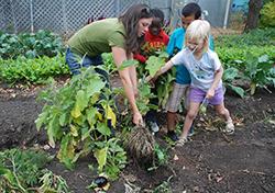 Martin School Garden